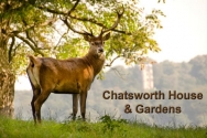 Approx. half an hour's journey by car, Chatsworth is the home of the Duke and Duchess of Devonshire, one of Britain's best loved historic estates.